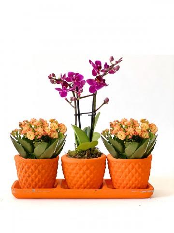 Muhteşem 3'lü Set Orkideler çiçek gönder