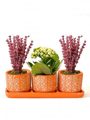 Mis Kokulu Kalanchoe ve Lavanta Aranjmanı Saksı Çiçekleri çiçek gönder
