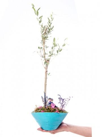 Cannae Serisi Zeytin Ağacı Tasarım Saksı Çiçekleri çiçek gönder