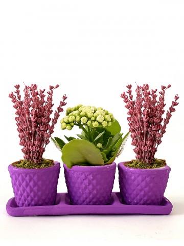 Sade ve Naif  Saksı Çiçekleri çiçek gönder
