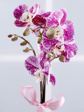 Bir Tek Sen Pembe Orkide Çiçeği Orkideler çiçek gönder