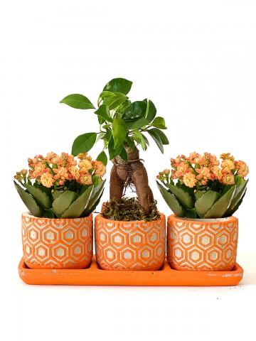 Özel Tasarım Kalanchoe ve Bonsai Bitkisi Saksı Çiçekleri çiçek gönder