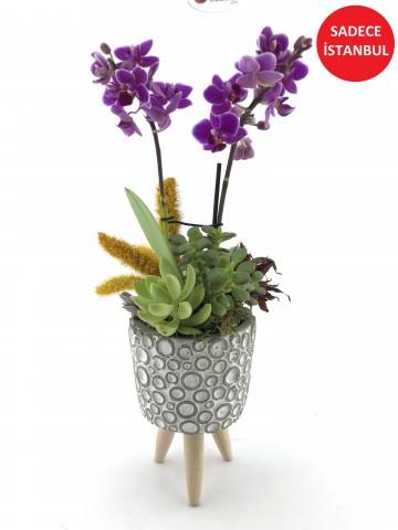 Asaletli Mor 2 Dal Orkide Orkideler çiçek gönder