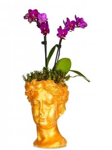 Helen'de Orkide Bir Başka Orkideler çiçek gönder