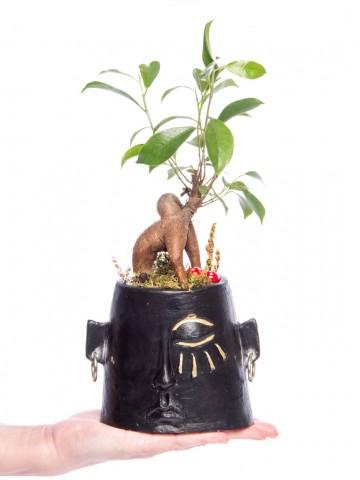 Arati Serisi Ficus Ginseng Bonsai Tasarım Saksı Çiçekleri çiçek gönder
