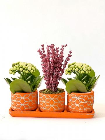Özel Tasarım Kalanchoe ve Lavanta Aranjmanı Saksı Çiçekleri çiçek gönder