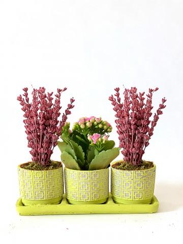 Mis Kokulu Lavantalar ve Kalanchoe Çiçeği Saksı Çiçekleri çiçek gönder