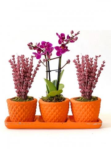 Orkide ve Lavantanın Uyumu Orkideler çiçek gönder