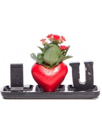 Amore Serisi Kalanchoe Tasarım Saksı Çiçekleri çiçek gönder