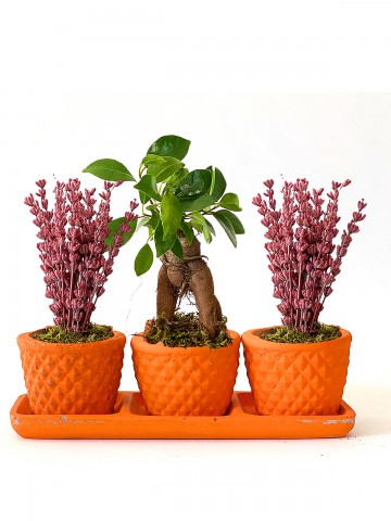 Bonsai ve Lavanta muhteşem 3'lü Saksı Çiçekleri çiçek gönder