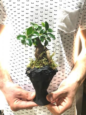 Siyah Helen de Bonsai Bitkisi Saksı Çiçekleri çiçek gönder