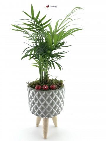 Ayaklı Saksı da Chamaedorea Bitkisi (Dağ Palmiyesi) Saksı Çiçekleri çiçek gönder