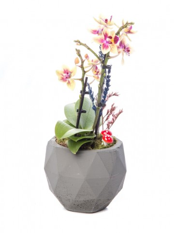 Geometric Serisi Mini Sarı Orkide Tasarım Orkideler çiçek gönder