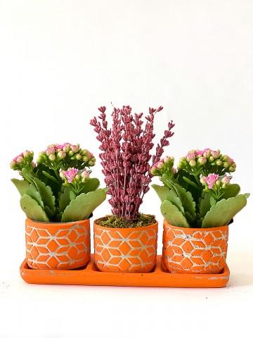 Lavanta ve Kalanchoe İhtişamı Saksı Çiçekleri çiçek gönder