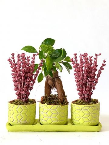 Bonsai ve Lavantaların Güzelliği Saksı Çiçekleri çiçek gönder