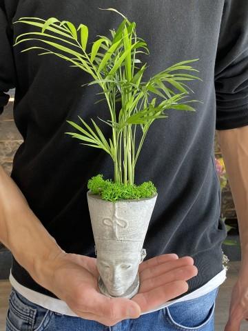 Nefertiti Chamadore Saksı Çiçekleri çiçek gönder