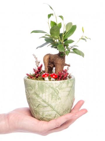 Herba Serisi Ficus Ginseng Bonsai Tasarım Saksı Çiçekleri çiçek gönder
