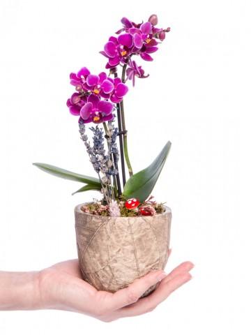 Wood Herba Serisi Mini Mor Orkide Tasarım Orkideler çiçek gönder