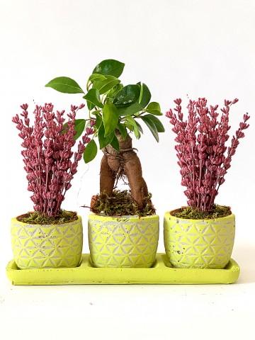 Özel Tasarım  Bonsai ve Lavanta Aranjmanı Saksı Çiçekleri çiçek gönder