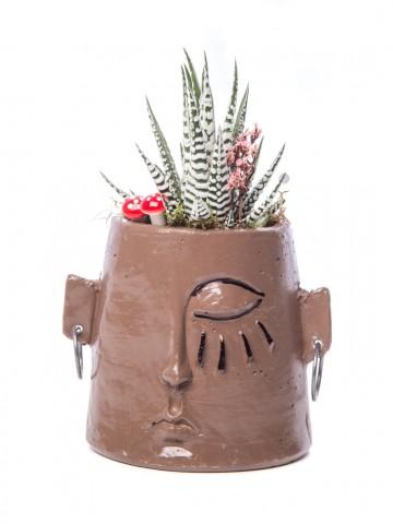 Arati Serisi Howarthia Tasarım Saksı Çiçekleri çiçek gönder