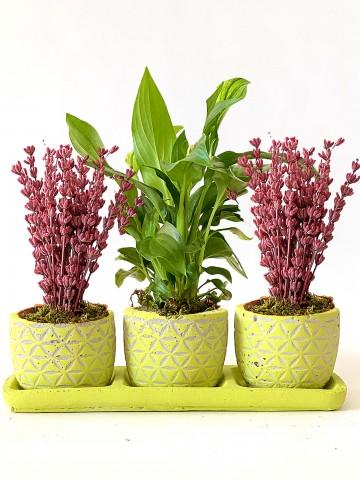 Özel Tasarım 3'lü Vip Set Saksı Çiçekleri çiçek gönder