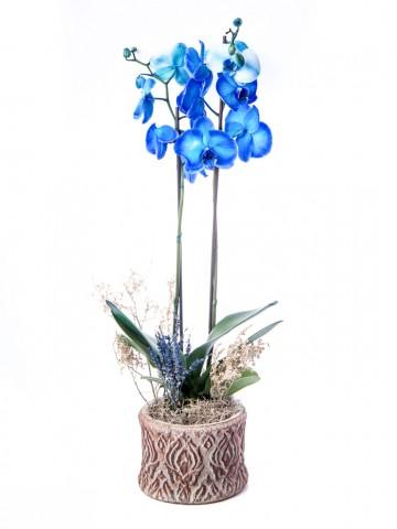Büyük Orkide Serisi Orkide Tasarım Orkideler çiçek gönder