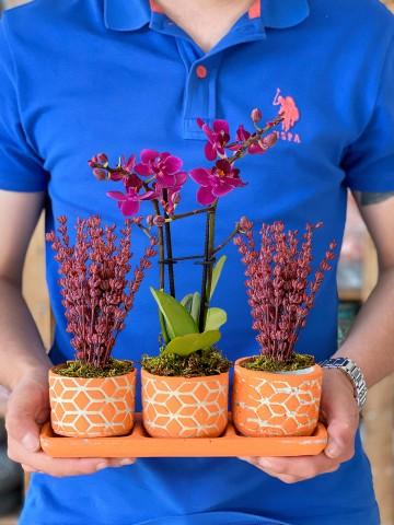 Kalanchoe ve Mini Orkide Aranjmanı Orkideler çiçek gönder