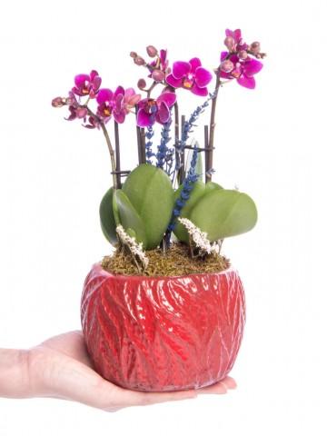 Maoka Serisi Mini Mor Orkide Tasarım Orkideler çiçek gönder