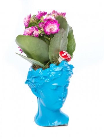 Mini Hero Serisi Kalanchoe Tasarım Saksı Çiçekleri çiçek gönder