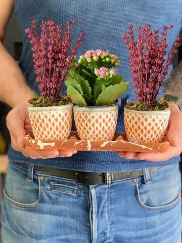 Kalanchoe ve Lavantaların Dansı Saksı Çiçekleri çiçek gönder