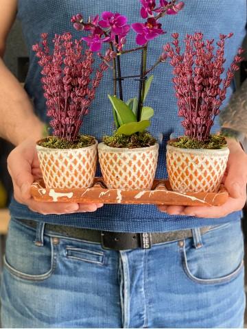 Lavanta ve Orkidenin Eşsiz Güzelliği Saksı Çiçekleri çiçek gönder