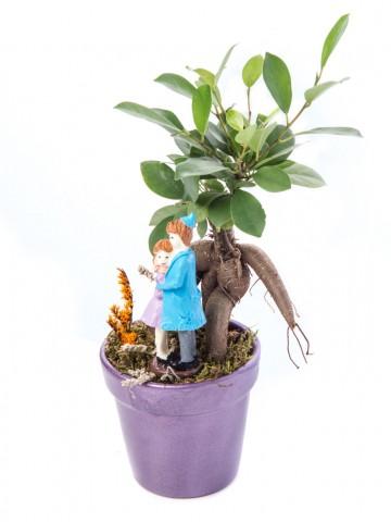 Opal Serisi Ficus Ginseng Bonsai Tasarım Saksı Çiçekleri çiçek gönder