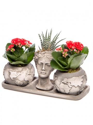 Trio Dünya Serisi Howarthia Tasarım Saksı Çiçekleri çiçek gönder