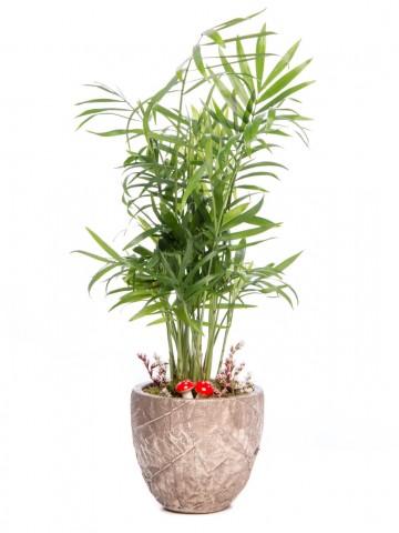 Wood Herba Serisi Chamadora Tasarım Saksı Çiçekleri çiçek gönder
