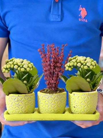 Mis Kokulu Lavanta ve Kalanchoe Bitkisi Saksı Çiçekleri çiçek gönder