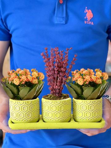 Lavanta ve Kalanchoeların Mis Kokulu Dansı Saksı Çiçekleri çiçek gönder