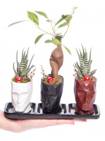 Trio Zeus Serisi Ficus Ginseng Bonsai Tasarım Saksı Çiçekleri çiçek gönder