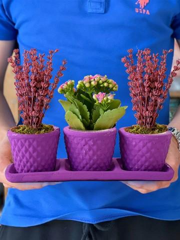 Bir Bahar Akşamı 3'lü Bitki Seti Ferforje çiçek gönder