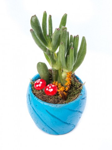 Softy Serisi Para Çiçeği Tasarım Saksı Çiçekleri çiçek gönder