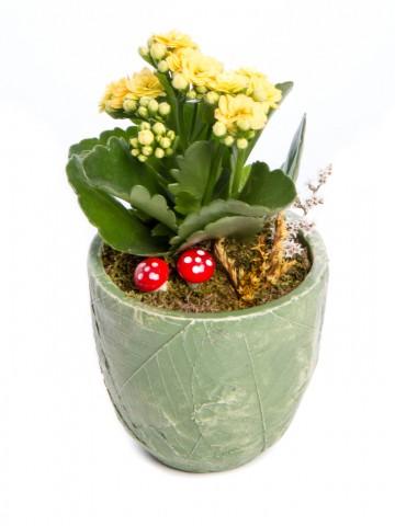 Herba Serisi Kalanchoe Tasarım Saksı Çiçekleri çiçek gönder