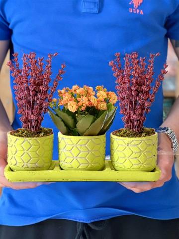 Muhteşem Üçlü Bitki Seti Saksı Çiçekleri çiçek gönder