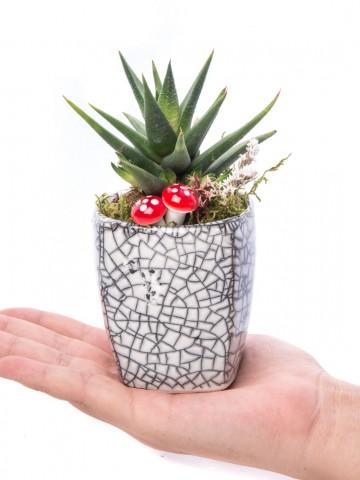 Mosaic Serisi Howarthia Tasarım Saksı Çiçekleri çiçek gönder