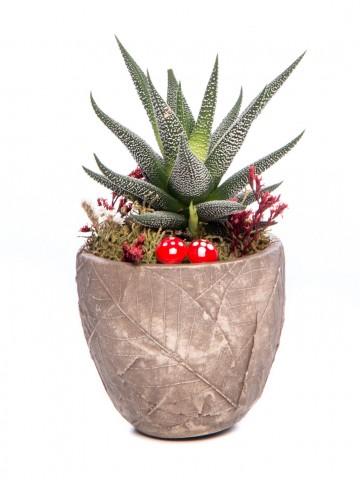 Wood Herba Serisi Howarthia Tasarım Saksı Çiçekleri çiçek gönder