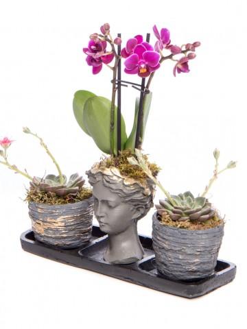 Trio Picto Gold Mini Mor Orkide Tasarım Orkideler çiçek gönder