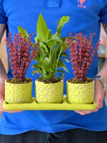Spathiphyllum  ve Lavantaların Eşsiz Dansı Saksı Çiçekleri çiçek gönder