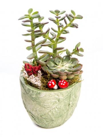 Herba Serisi Para Çiçeği Tasarım Saksı Çiçekleri çiçek gönder