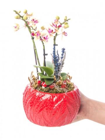 Maoka Serisi Mini Sarı Orkide Tasarım Orkideler çiçek gönder