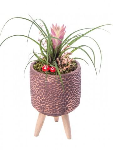 Auctore Serisi Tillendsia Tasarım Saksı Çiçekleri çiçek gönder