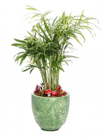 Herba Serisi Chamadora Tasarım Saksı Çiçekleri çiçek gönder