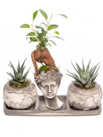 Trio Dünya Serisi Ficus Ginseng Bonsai Tasarım Saksı Çiçekleri çiçek gönder